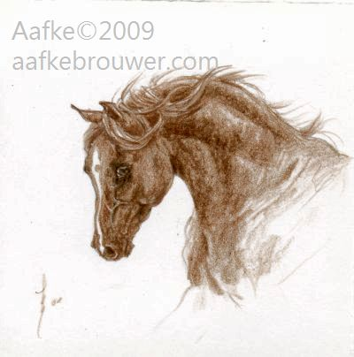 aafke brouwer horses equine art drawing portrait Rabhar